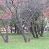 Коллекционный сад, г. Мичуринск